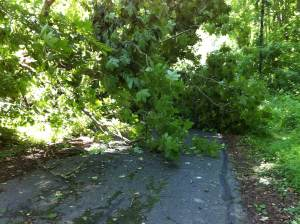 photo of downed tree